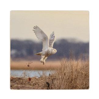 Snowy owl taking off wood coaster