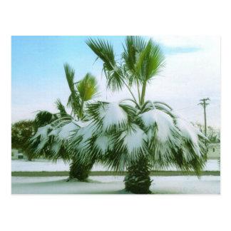 Snowy Palms in Seadrift Texas Postcard
