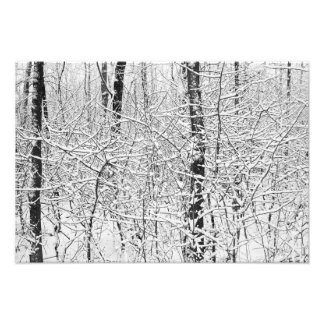 Snowy Patterns 1 Photo Print