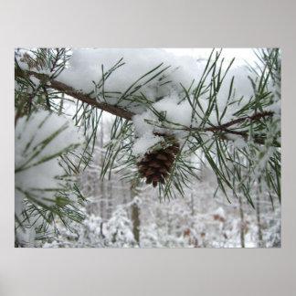 Snowy Pine Branch Print
