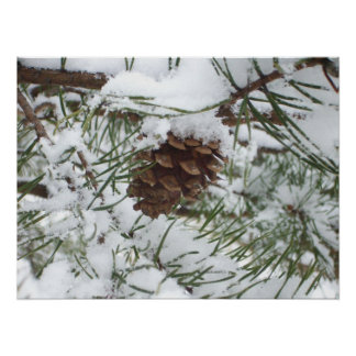 Snowy Pine Cone I Winter Nature Photography Poster
