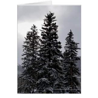 Snowy pines card