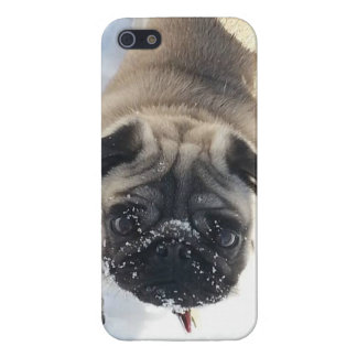 Snowy Pug iPhone 5/5s glossy case iPhone 5 Cover