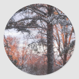Snowy Sunrise Winter Snow Pine Tree Photo Classic Round Sticker
