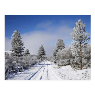 Snowy Track and Pine Trees, Cambrians, near St Postcard