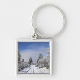 Snowy Track and Pine Trees, Cambrians, near St Silver-Colored Square Key Ring