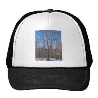 Snowy Tree Hat