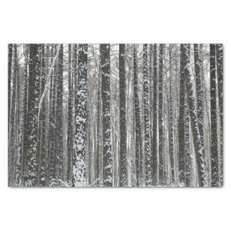 Snowy Tree Trunks Tissue Paper