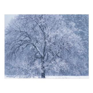 Snowy Tree Winter Frozen Scene Postcard