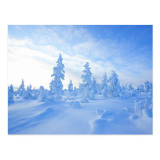 snowy trees in Lapland in Finland Postcard