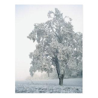 Snowy winter landscape postcard