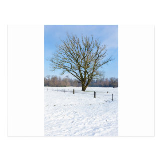Snowy winter landscape with bare tree and blue sky postcard