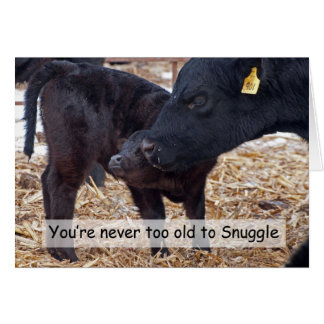 Snuggling Cows Card
