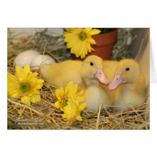 Snuggling Ducklings Card
