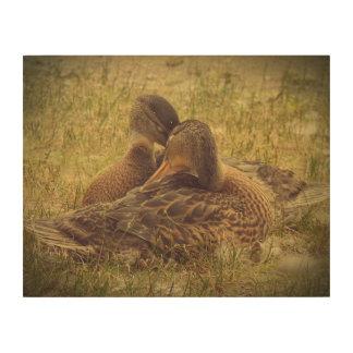 Snuggling Ducks Wood Print