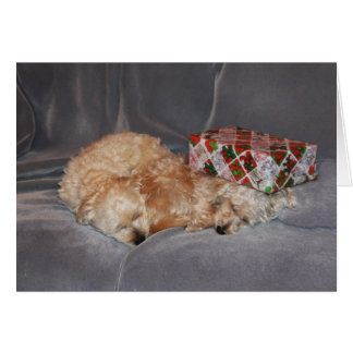 Snuggling puppy Christmas card