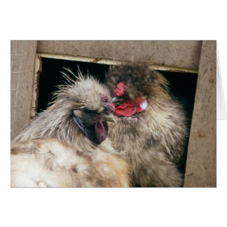 Snuggling Silkie Chickens Hens - Poultry Card