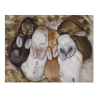 Snuggly Baby Bunnies Postcard