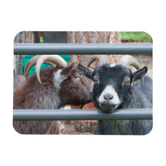 Snuggly Goats! Magnet