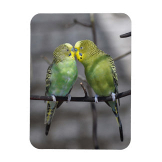 Snuggly Pair of Budgies Magnet