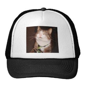 So high right meow cap