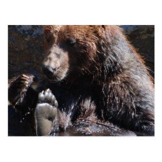 Soaking Bear Postcard