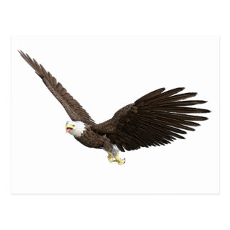 Soaring Bald Eagle Postcard