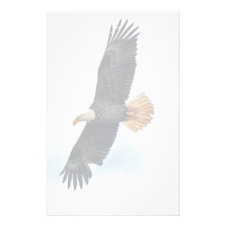 Soaring Bald Eagle Wildife Photo Art Stationery