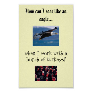 soaring eagle, Turkeys, How can I soar like an ... Poster