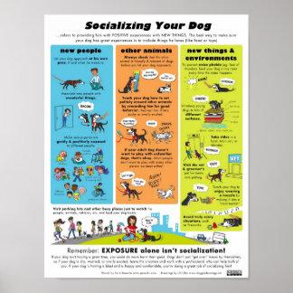 Socializing Your Dog Poster