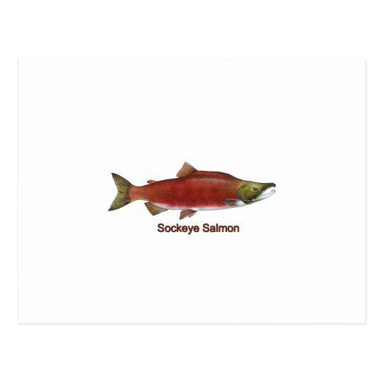 Sockeye - Red Salmon (titled) Postcard