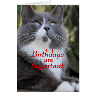 Socks cat  birthday card..- for any occasion card