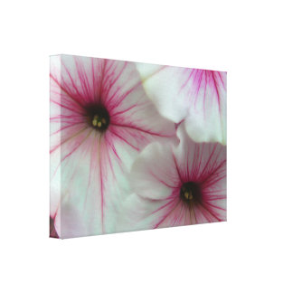 Soft and delicate Pink Petunias Canvas Print