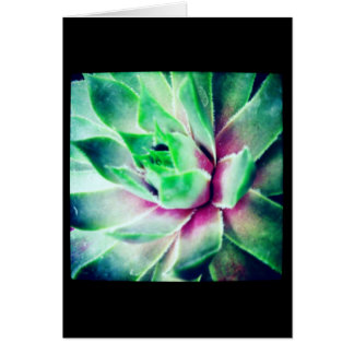 Soft Focus Succulent Blank Greeting Card