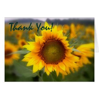 Soft Focus Sunflower Thank You Card