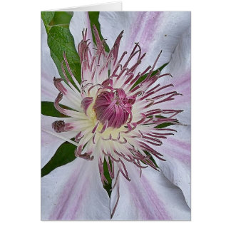 Soft Fuchsia Card
