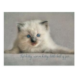 Soft kitty, ragdoll postcard