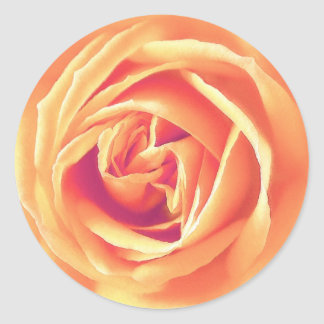 Soft orange rose print round sticker