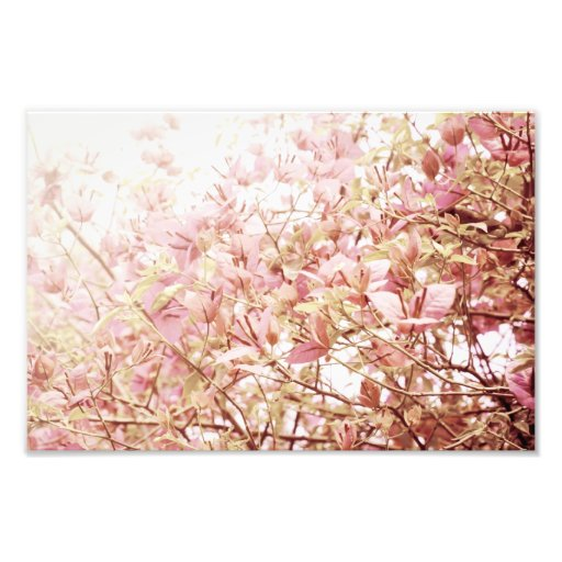 Soft Pastel Floral Branches Photo Print