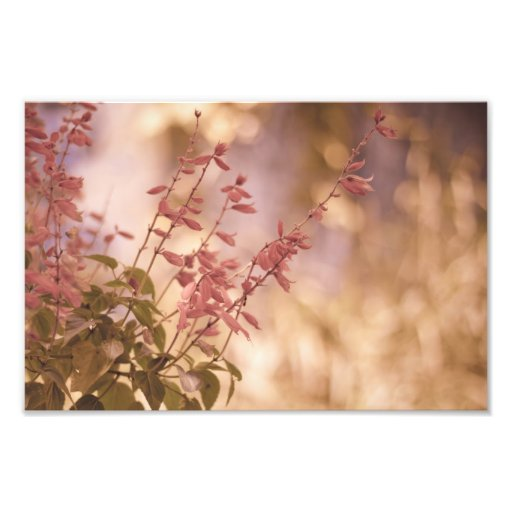 Soft Pastel Floral Branches Photo