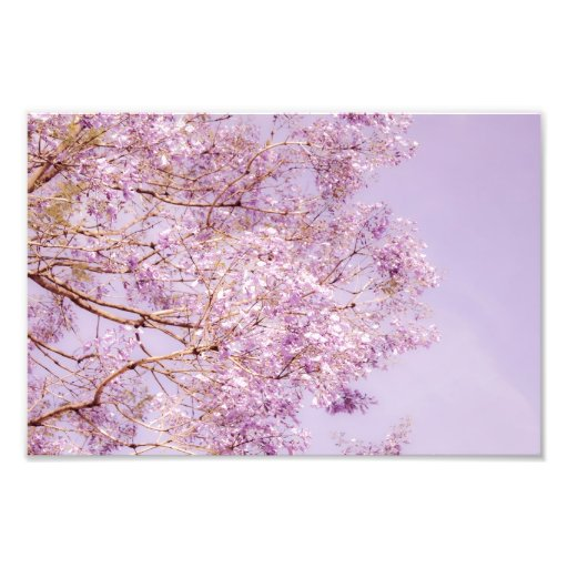 Soft Pastel Floral Branches Art Photo