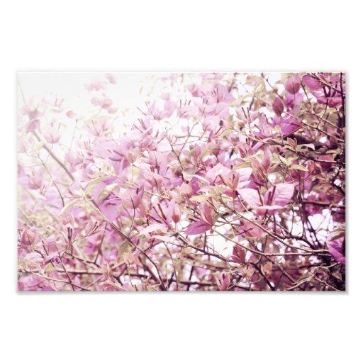 Soft Pastel Floral Branches Photograph