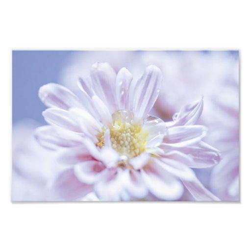 Soft Pastel Flower Photo Art