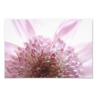 Soft Pastel Flower Photograph