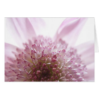 Soft Pastel Flower Photograph Card