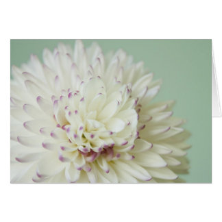 Soft Pastel Flower Photograph Greeting Card