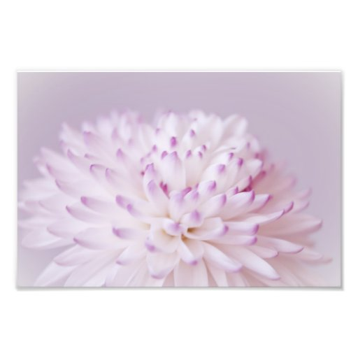 Soft Pastel Flower Photography Photo Art