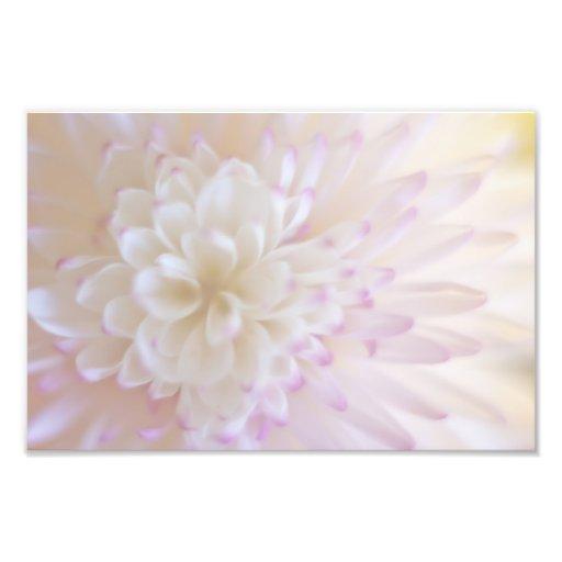 Soft Pastel Flower Photography Photo