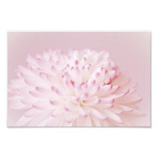 Soft Pastel Flower Photography Photographic Print