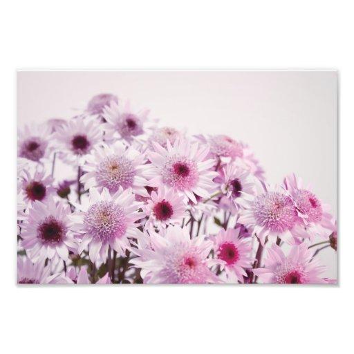 Soft Pastel Flowers Photographic Print
